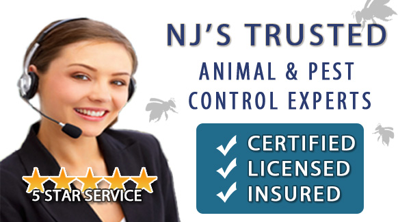 Pest Control NJ | Animal Control NJ - Image