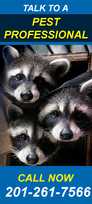 Wildlife Removal NJ | Wildlife Control NJ - CTA