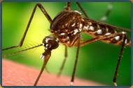 Mosquito Removal NJ | Mosquito Control Services New Jersey | Mosquito Pest Control NJ
