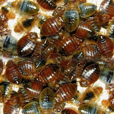 Bed Bug Control in Glen rock, NJ Image