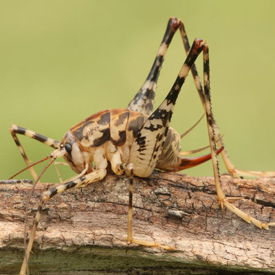 Cave Cricket Removal in Middlesex County, NJ Image