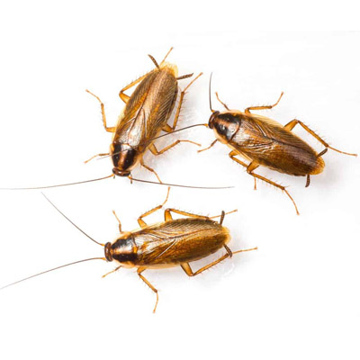 Roach Removal in Morris County, NJ Image