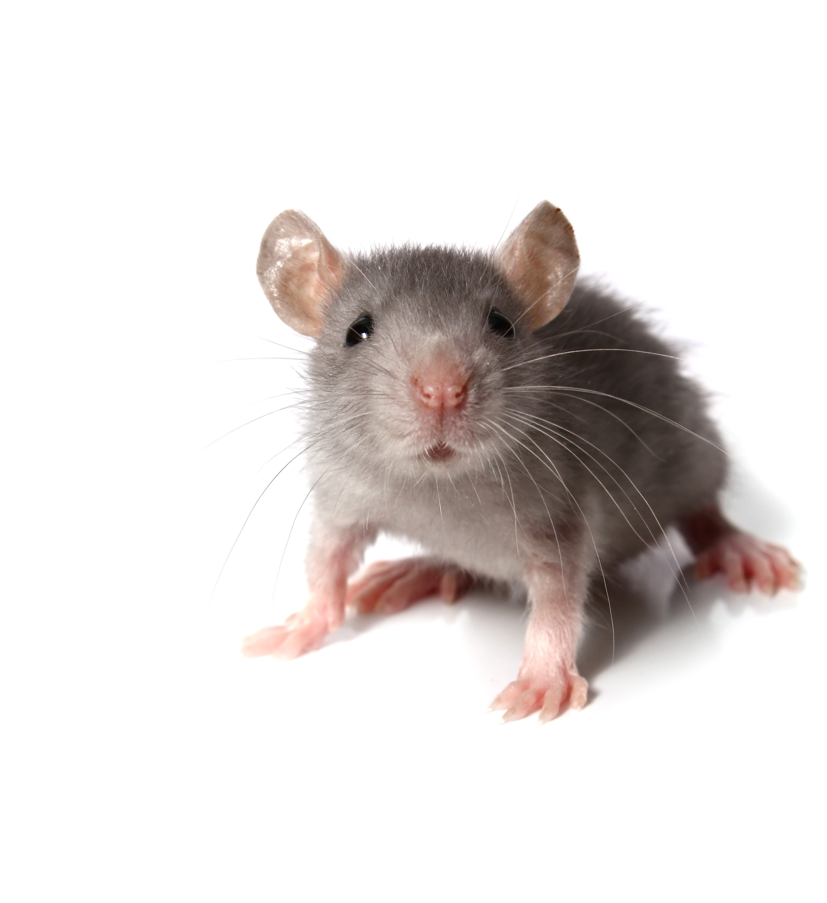 Mice Control in Newark, NJ Image